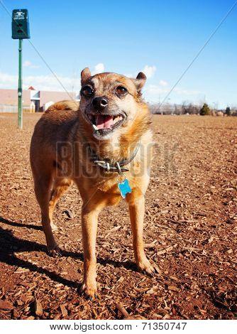 a dog out enjoying nature at a dog park