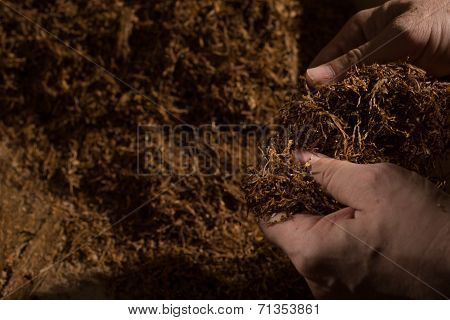 Inspection Of Tobacco Quality