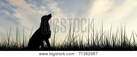 Concept or conceptual young beautiful black cute dog silhouette in grass or meadow over a sky at sunset landscape banner background