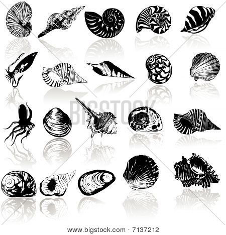 Vector illustration of different  sea  shells