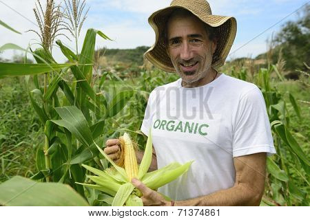 Organic farming: portrait of an eco farmer showing corn inside the plantation