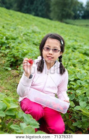 Asian Girl Picking Strawberries