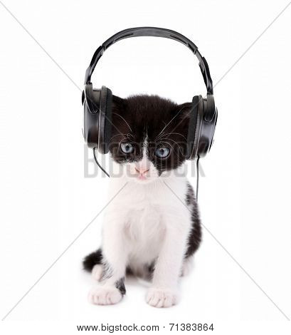 Cute kitten and headphones, isolated on white