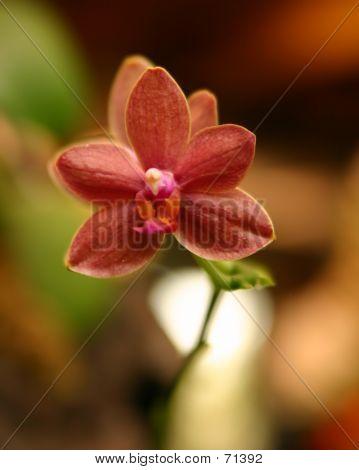 Pequeña flor
