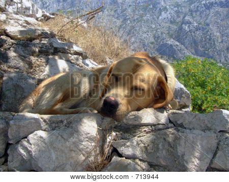 Pupy Asleep