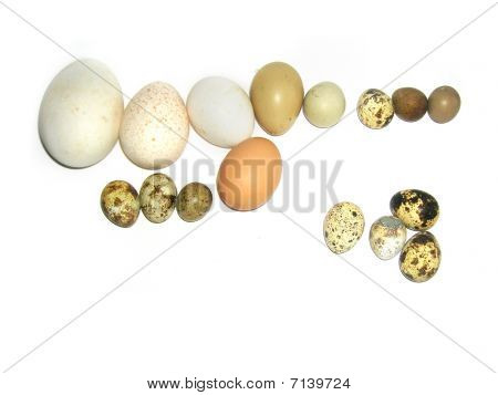 Exotic Eggs  In Basket  Isolated On White