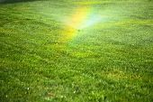 stock photo of sprinkler  - garden sprinkler on a sunny summer day during watering the green lawn