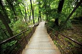 picture of stairway  - Stairway in Park with many trees - JPG