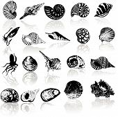 foto of pearl-oyster  - Vector illustration of different  sea  shells isolated on white - JPG