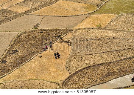 Ploughing Fields In Nepal