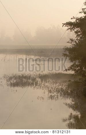 misty morning in Bardia, Terai, Nepal