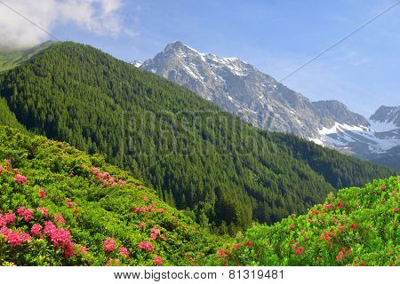 View of the mountains from the valley Antholzertal. Riesenfernergruppe mountain range, South Tyrol, Italy