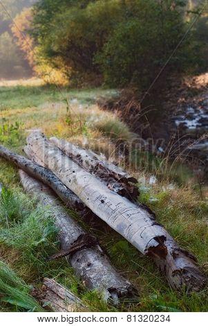 wet woods in morning dew