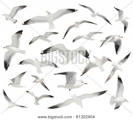 white bird set isolated