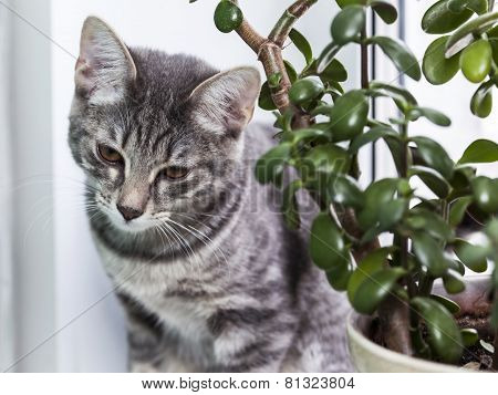 The gray kitten hid among house plants