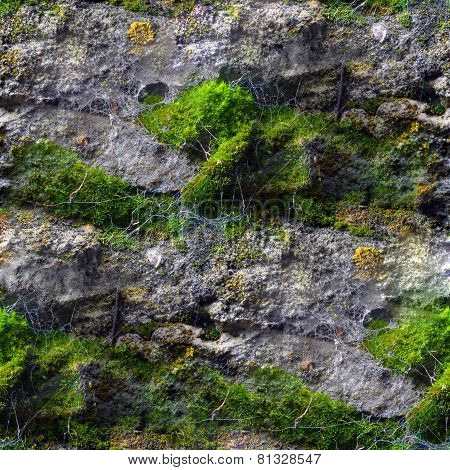 Seamless texture with mold moss and cobwebs
