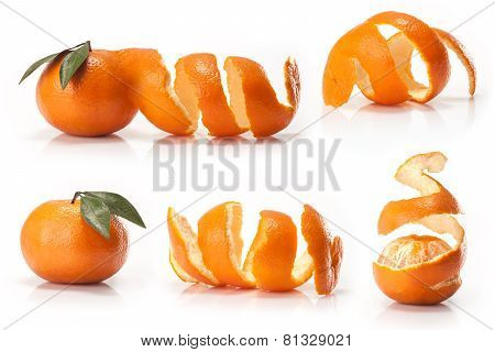 Orange  on white background