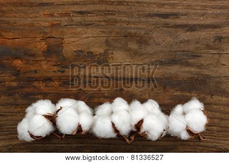 cotton organic plant ripe buds wooden background