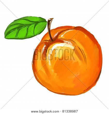 Peach Vector illustration of ink hand drawn  painted watercolor