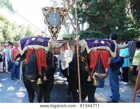 Bull cart procession, Marbella.