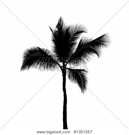 Black Silhouette Of One Coconut Palm Tree Isolated On White