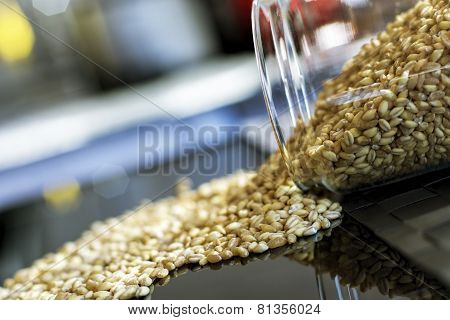 Wheat Grains Falling on Black Background