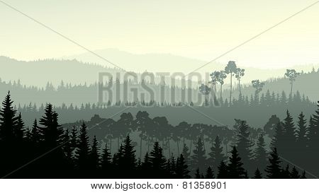 Wild Coniferous Wood In Green Tone.