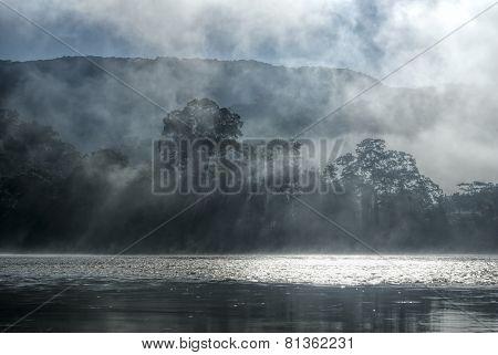 Mist In Jungle