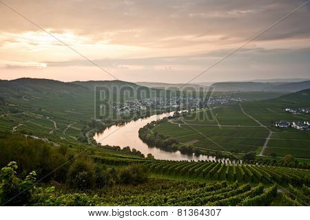 World Famous Sinuosity At The River Mosel Near Trittenheim With Vineyards At The Edge