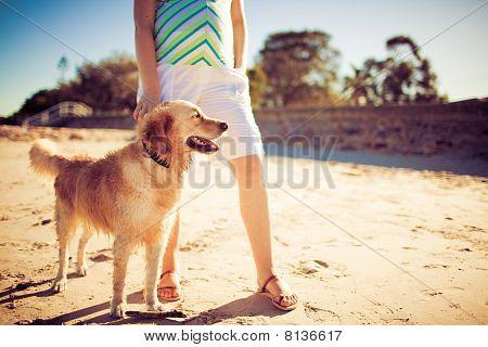Golden Retriever Standing By Legs Of A Woman