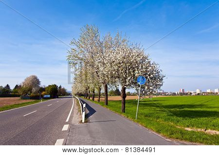 Close-up Branch Of Bloom In Spring  With Street And Bike Path