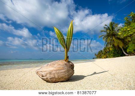 Coconut Palm On The Sandy Beach Of Tropical Island