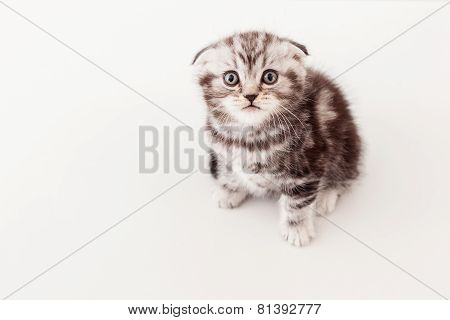 Small And Curious Kitten