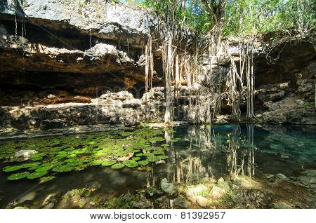 X-batun Cenote - Turquoise Fresh Water With Water Lilies And Rocky Wall With Fantastic Tree Roots