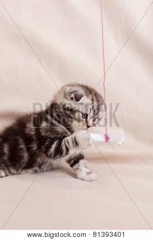 Tiny Feline.