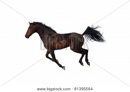 Bay horse galloping on white background