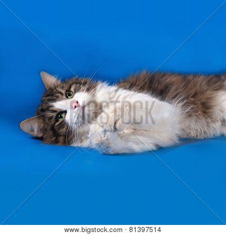 Tricolor Cat Lies On Blue