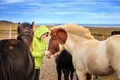 pic of iceland farm  - A woman tourist befriends a group of Icelandic Ponies in the Iceland countryside - JPG