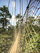 image of canopy  - Canopy walkway in Kakum National Park Accra Region Ghana West Africa - JPG