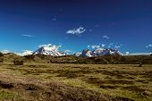pic of pain-tree  - Scenic view of snowy peaks and grassy meadows in Torres del Paine National Park - JPG