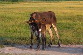 image of donkey  - Donkey Mom with the baby donkey on the farm - JPG