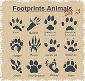foto of animal footprint  - Footprints Animals  - JPG