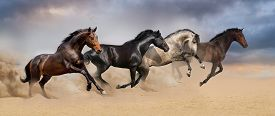 picture of wild horse running  - Four beautiful horse run gallop on desert dust - JPG