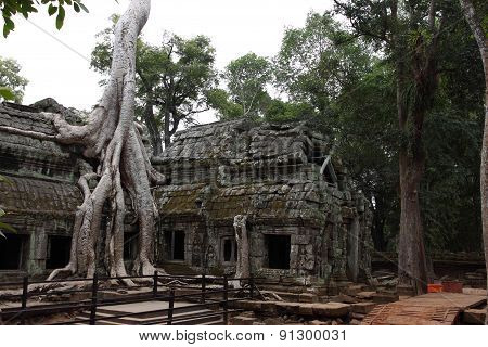 Ta Prohm Temple in Angkor, Siem Reap, Cambodia