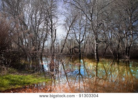 water scenery and dry trees