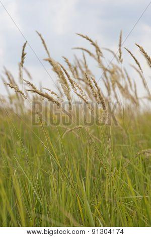 meadow, plain, grass, nature, outdoor, green, landscape, cloud, view, field, yellow, vertical, summe