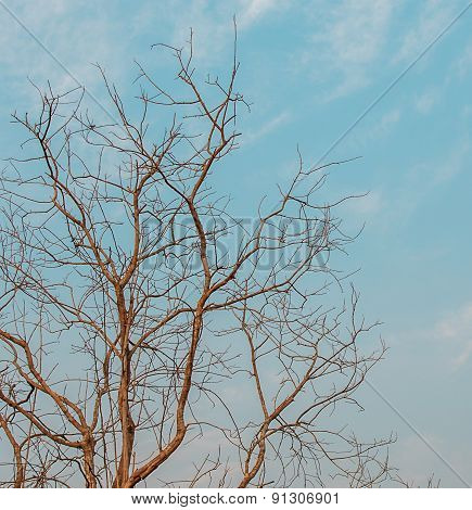 Dry Branches In Blue Sky Background
