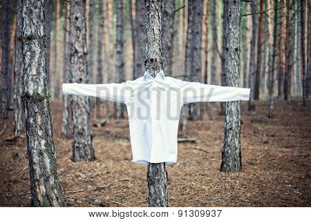 Shirt On A Tree