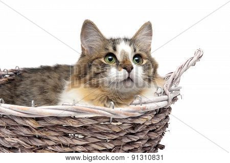 Kitten Lying In A Basket On A White Background Close-up