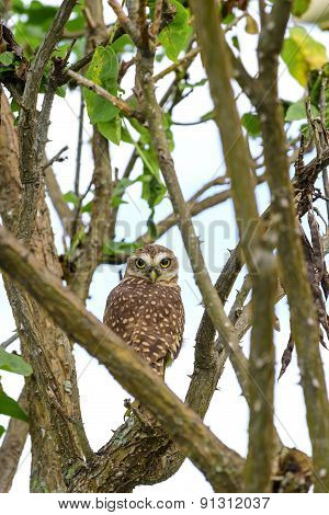 Owl perched on tree